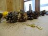 DIY Jule gran-guirlande - Flotte fyr kogler, ideelt til julepynt
