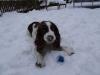 DIY Jule gran-guirlande - Værkstedshunden Lady fandt sin bold i sneen til sidst