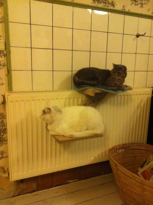 En hylde til kattene