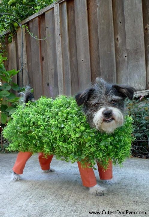 Udklædning til Fastelavn - Sjove kostumer - Hunden skal da ikke snydes ;-)