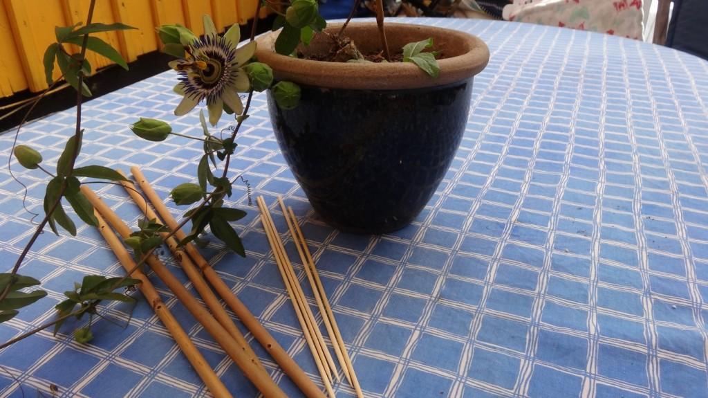 hjemmelavet-espalier-til-potte (5)